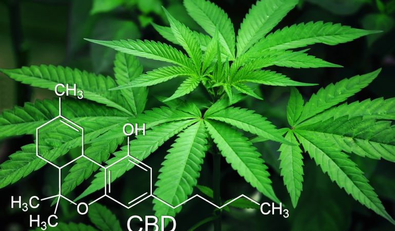 Top Uses For CBD Cannabis