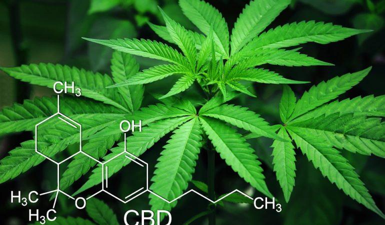 Top Uses For CBD Cannabis